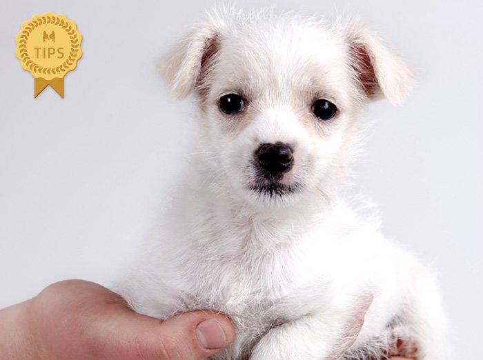 ワンちゃんをよく知り、自分に合った仔犬を選ぶ