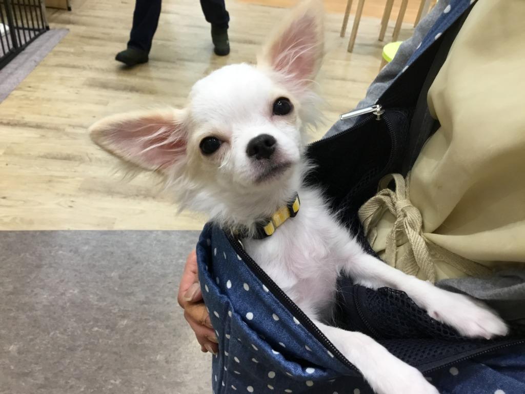 ⭐新しいおすすめ犬の発表~⭐