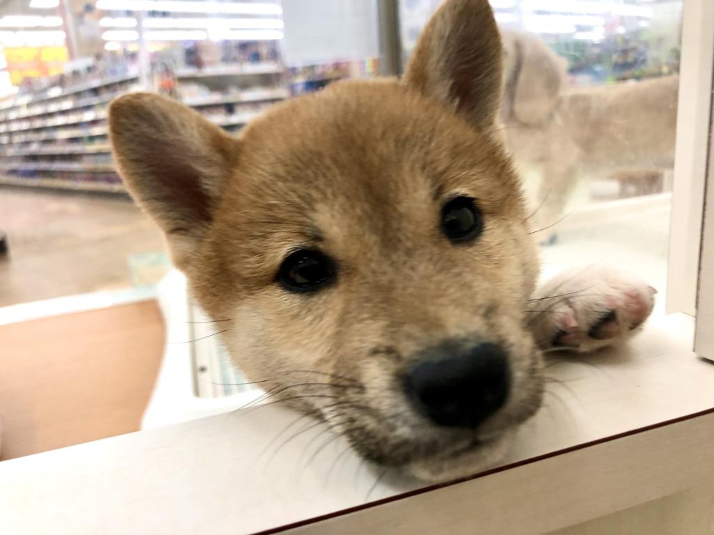 *NEWおすすめ犬*